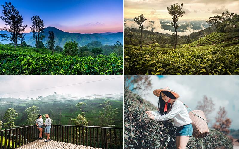 Top Instagrammable Spots In Sri Lanka Nuwara Eliya Tea Plantation