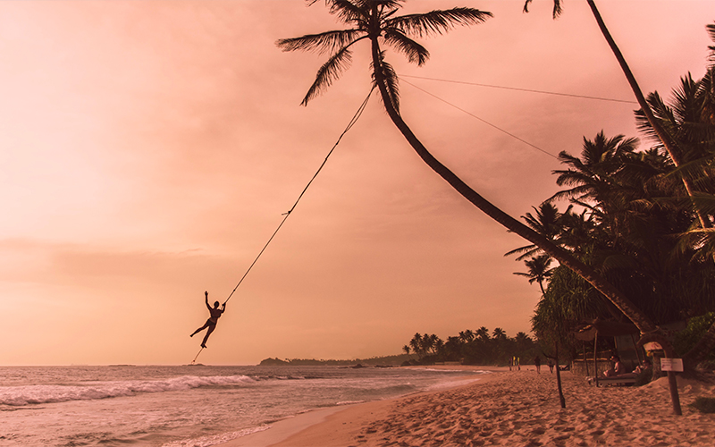 Top Instagrammable Spots In Sri Lanka Palm Tree Swings