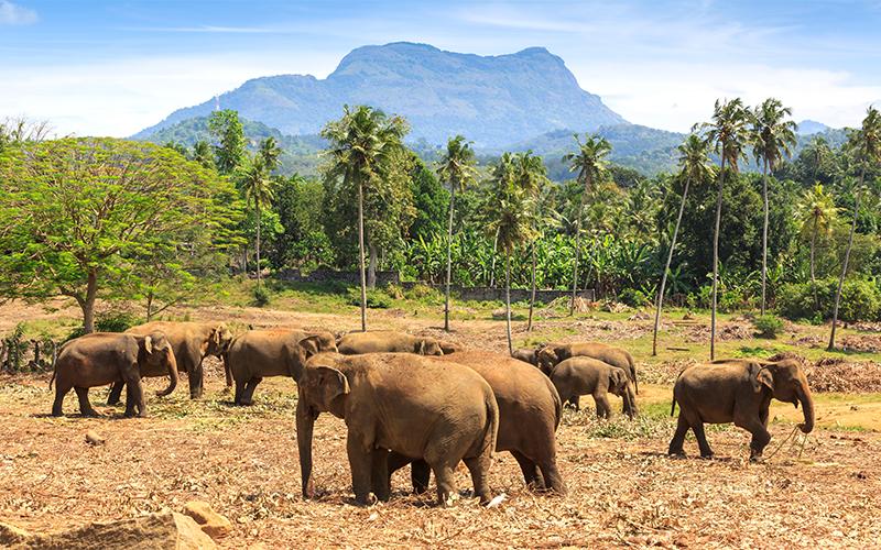 Top Instagrammable Spots In Sri Lanka Udawalawe National Park