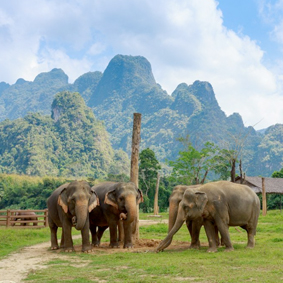 Thailand Honeymoon Packages Elephant Hills Thumbnail2