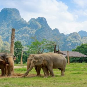 Thailand Honeymoon Packages Elephant Hills Unique Elephant Experience1