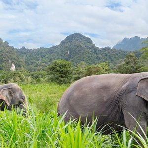 Thailand Honeymoon Packages Elephant Hills Unique Elephant Experience2