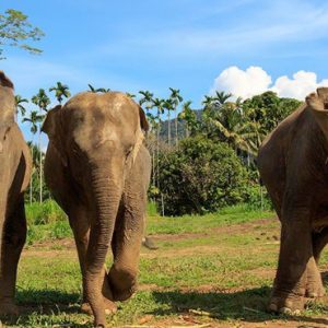 Thailand Honeymoon Packages Elephant Hills Unique Elephant Experience4