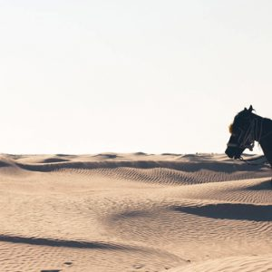 Abu Dubai Honeymoon Packages Jumeirah Al Wathba Tour Activity