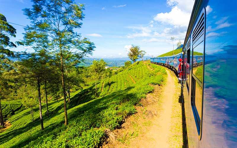 Day Excursions To Horton Plains & Local Train Experience From Ella Main