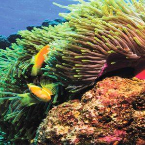 Maldives Honeymoon Packages Varu By Atmosphere Marine Life