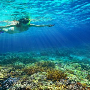 Mexico Honeymoon Packages Dreams Puerto Aventuras Resort & Spa Snorkeling1