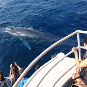 Mirissa Whale Watching Excursion Thumbnail