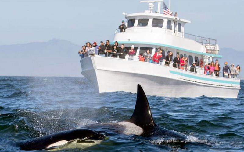 Mirissa Whale Watching Excursion1 Main