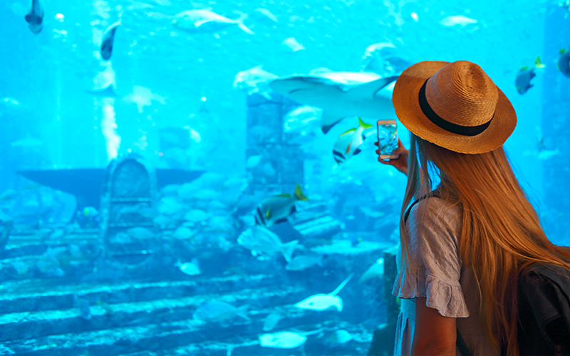 Top 10 Free Things To Do In Dubai On Your Honeymoon Blog Dubai Aquarium