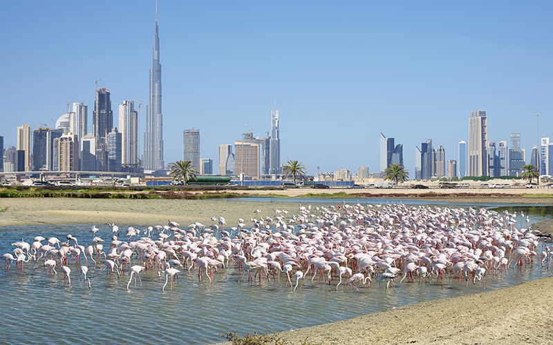 Top 10 Free Things To Do In Dubai On Your Honeymoon Blog Ras Al Khor