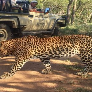 Game Drive Kapama Private Game Reserve South Africa Honeymoons