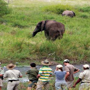 Guided Bush Walks Kapama Private Game Reserve South Africa Honeymoons