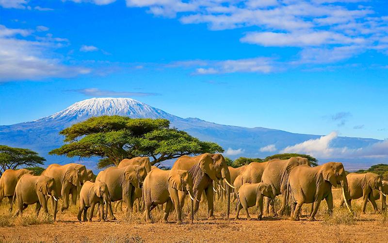 Kenya Best Honeymoon Destinations For 2021