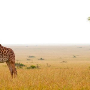 Kenya Honeymoon Packages Little Governors Wild Life