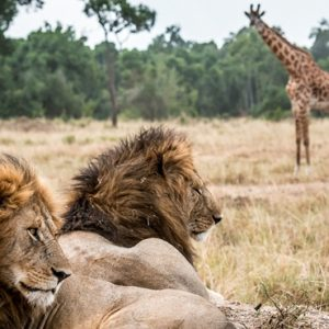 Kenya Honeymoon Packages Little Governors Wild Life 2