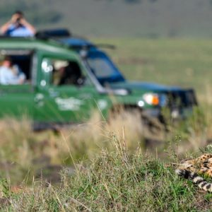 Kenya Honeymoon Packages Little Governors Wild Life 4