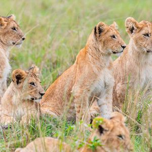 Kenya Honeymoon Packages Little Governors Wild Life 6