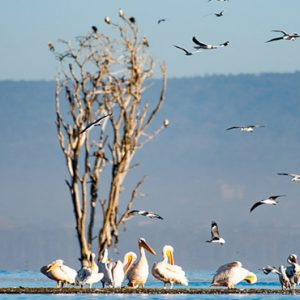 Kenya Honeymoon Packages Little Governors Day Trip To Lake Nakuru