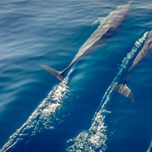 Maldives Honeymoon Packages Innahura Dolphin Watching
