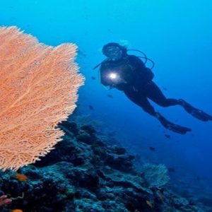 Maldives Honeymoon Packages Innahura Scuba Diving