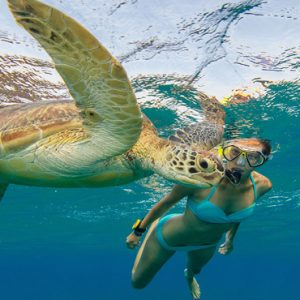 Maldives Honeymoon Packages Innahura Turtle Snorkeling