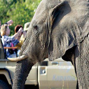 Safari Elephant Kapama Private Game Reserve South Africa Honeymoons