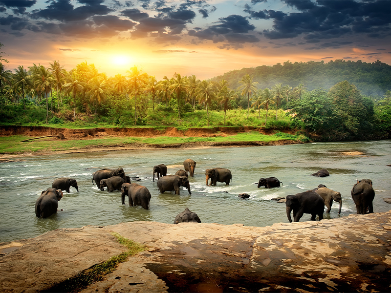 Sri Lanka Best Honeymoon Destinations For 2021 Honeymoon Ideas