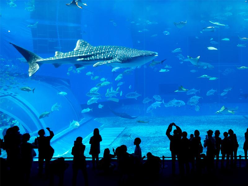 Dubai Aquarium Abu Dhabi Vs Dubai Honeymoon