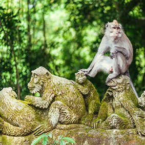 Sacred Monkey Forest Sanctuary Best Things To Do In Bali Bali Honeymoons