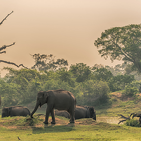 Yala National Park Best Things To Do In Sri Lanka