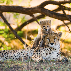 Kenya Safari Honeymoons Safarimoon Packages