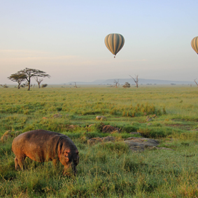 Hippo And Hot Air Balloon In Africa Adventure Honeymoons