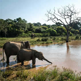 Sri Lanka Safari Tours Safari Honeymoons