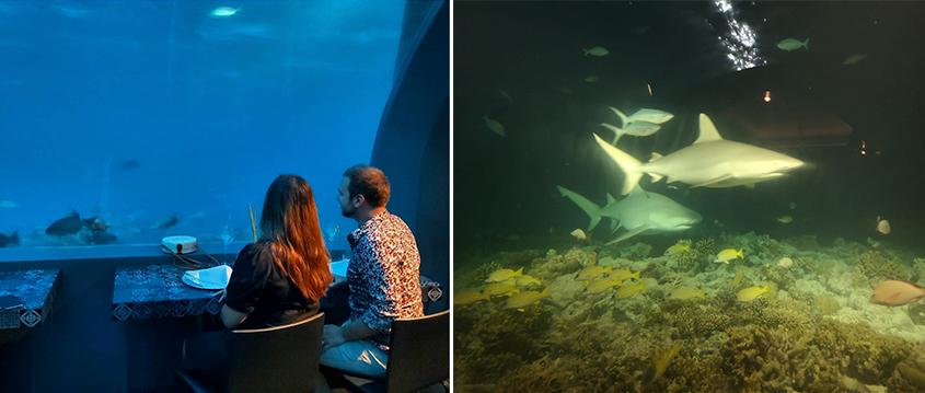 Tia And Chris's Amazing Maldives Honeymoon You&Me Maldives Honeymoon Underwater Restaurant Sharks